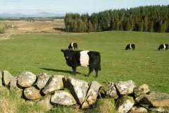 belties-May-Farm